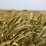 Nestlé fait le pari de la foodtech avec ses programmes Terra Food et Agtech Accelerator